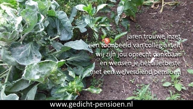 Grappige Citaten Pensioen : Beste gedichten pensioen met teksten vervroegde pensionering